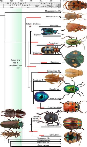 apocrita cladogram.ai